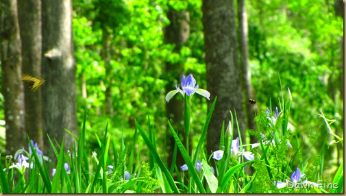 Silver Springs State Park_151