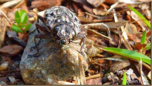 bug and around_026