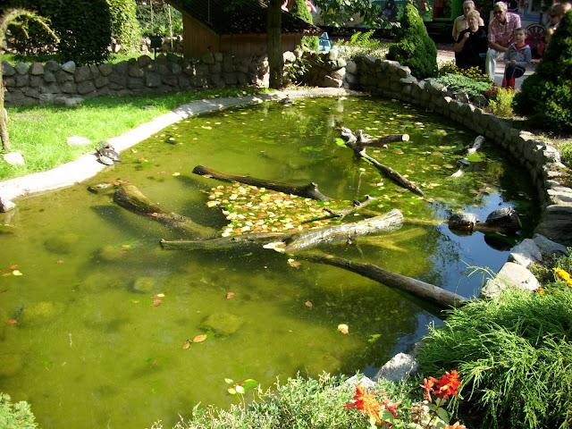 Basen żółwi - Zoo Oliwa