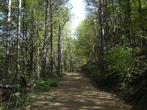 Put kroz šumu