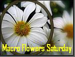 Macro Flowers Saturday badge 2