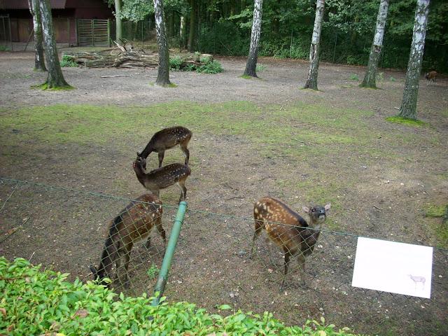 Wybieg jeleni Alfreda w poznańskim Nowym Zoo