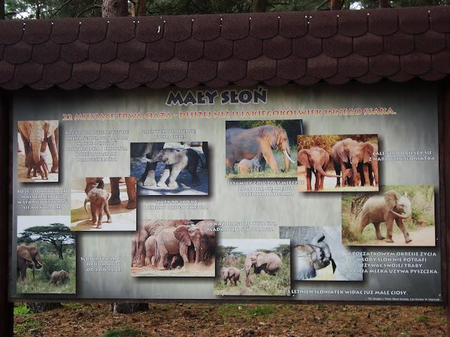 Słów kilka o małym słoniu