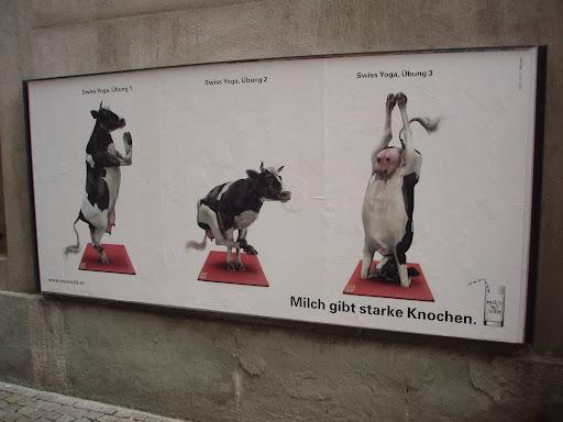 yoga cow...