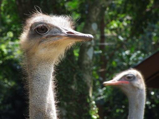 Jenis Jenis Burung Paling Berbahaya Di Dunia Ghofurblog