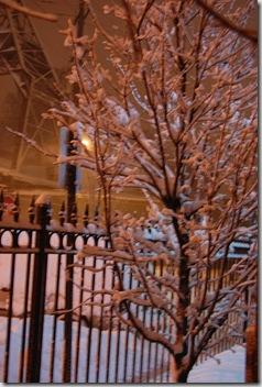 Snow 178