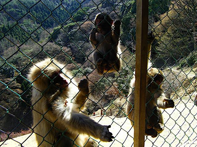 Crazy monkeys!  Dont eat me!