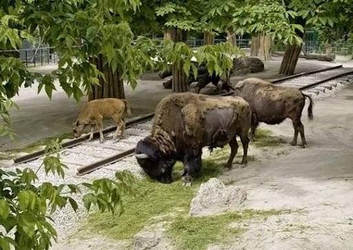 animals_and_nature_2.jpg