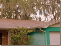 Tampa Roof Cleaning 011