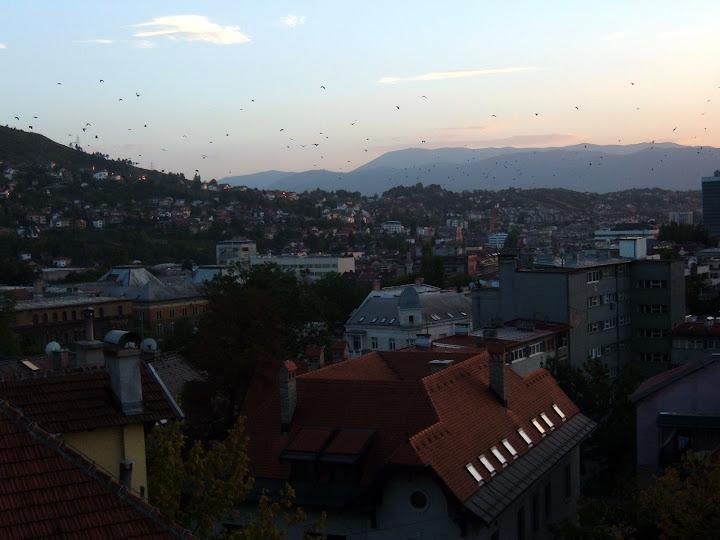 Birds Over Sarajevo