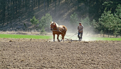 Preparing the field