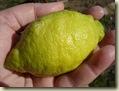 lemon_1_1