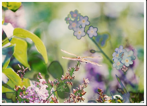 DRAGONFLIES Forget me not