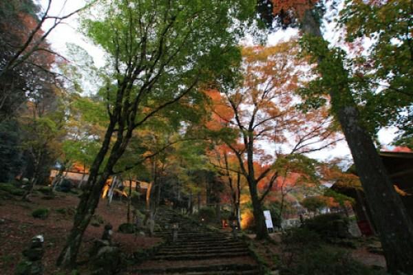 kougenji1.jpg