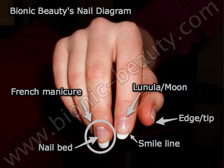 Bionic's dictionary of finger nail terminology | Bionic ...