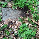 Ein Grabstein aus alter Zeit inmitten von Wildnis