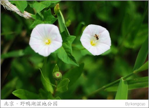 野鴨湖國家濕地公園的植物 | 空錯志