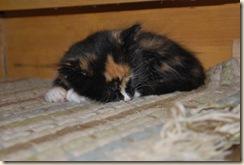 katie cat sleeping