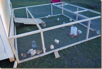 farm life fall 2010 004