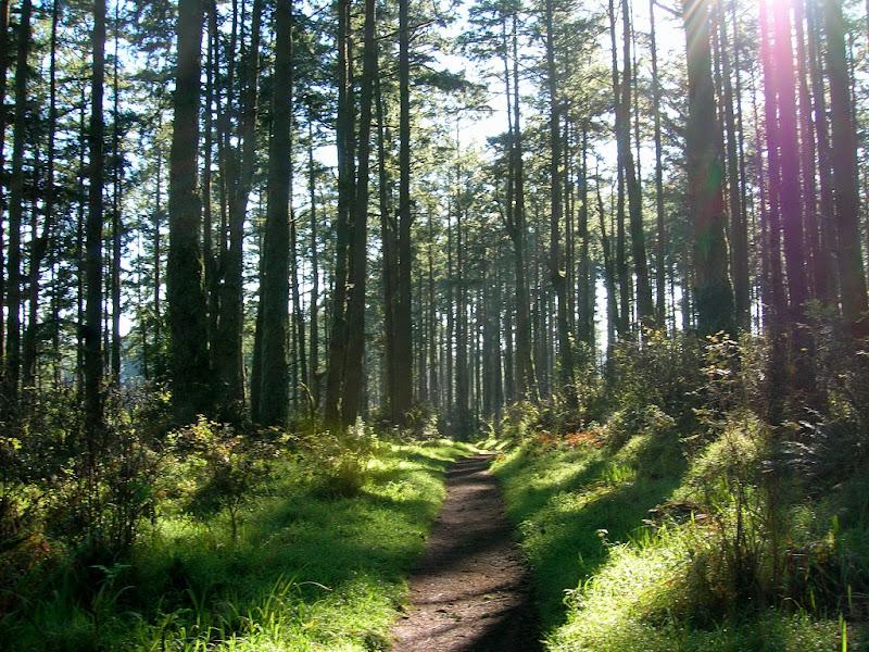 Sky Trail