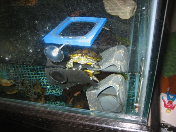 red ear slider pet turtle tank