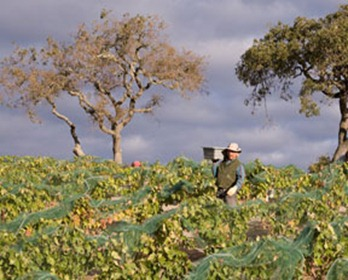 07harvest_02small