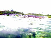 Testudo' Snorkel Guide Cayman Beaten Path