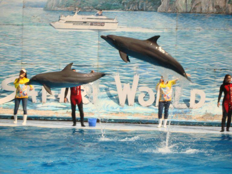 Du lịch Thái Lan (04): Biểu diễn cá heo (Dolphin show)   Du Lịch thế