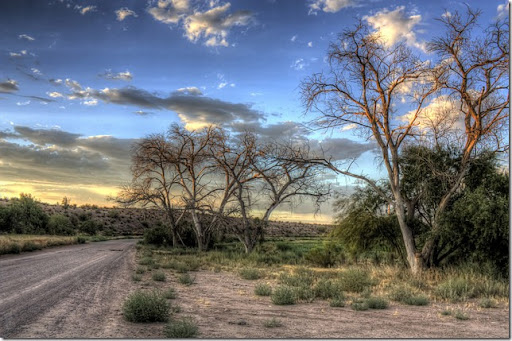 photoshare Light In The Trees North Pinal AX ChandlerMike