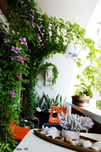 The 6x8 garden: Balcony garden inspiration  Clematis trellis