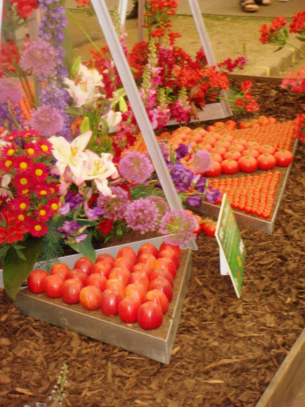 tomatoes at Chelsea Flower Show