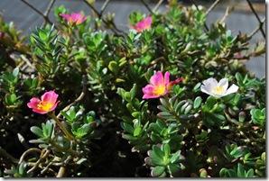 Primavera 21-09-09 002