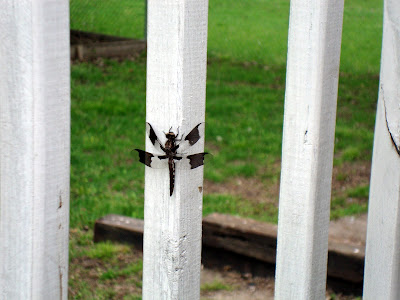 Dragon Fly Maybe