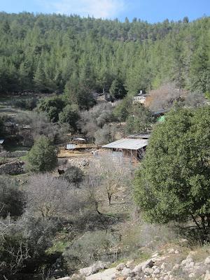 Farm, hidden in the trees