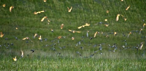 bunch of birds taking off during golden hour