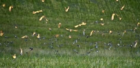 bunch of birds taking off during golden hour