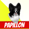 /he/papillon-dog-breeds