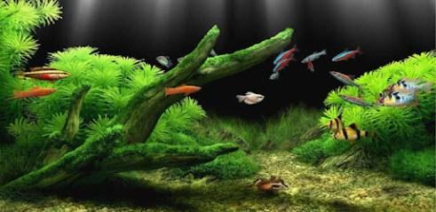 Télécharger Aquarium Fond Décran Animé Pour Pc Gratuit