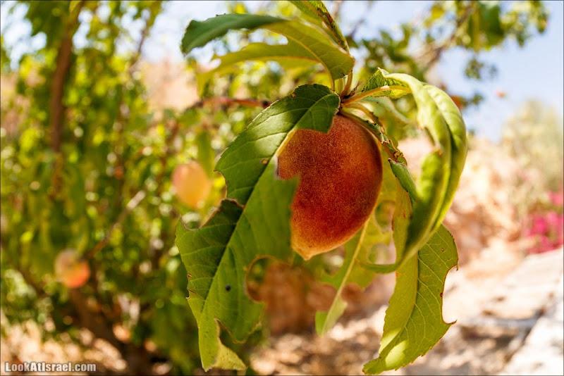 Одно фруктовое фото