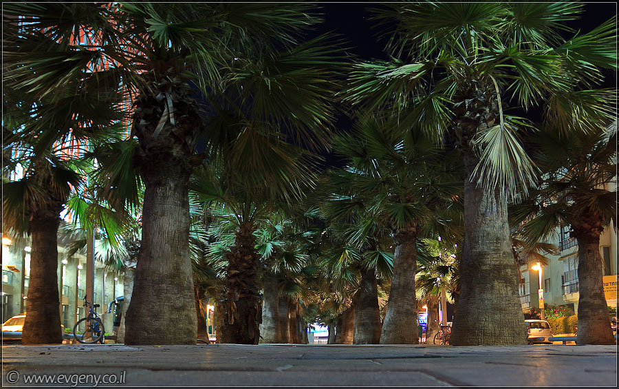 Тель Авив, бульвар Нордау | Tel Aviv, Nordau blvd | תל אביב, שדרות נורדאו
