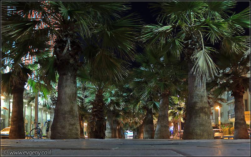 Одно фото / Израиль, Тель Авив, бульвар Нордау