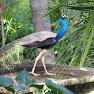 SriLanka_560.jpg