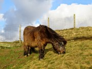 The Ponies Were Still At Back Tor