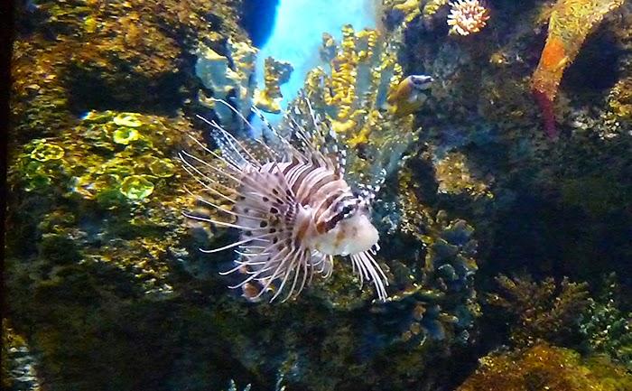 photos de la semaine, Malte aquarium, tourisme, visites, poissons