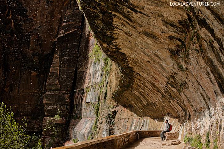 Weeping Rock (15 Best Hikes in Zion National Park Utah).