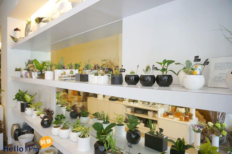 台南盆栽,日光夏蘭植物工房