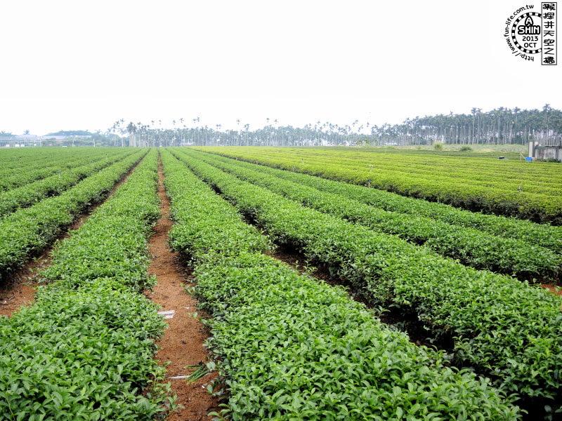 猴探井這邊很多種茶園、鳳梨田。