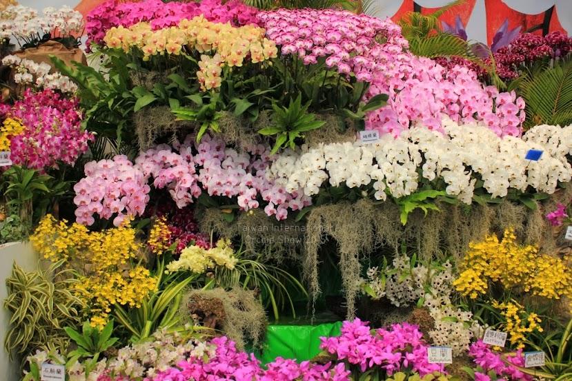 2015 台灣國際蘭花展時間