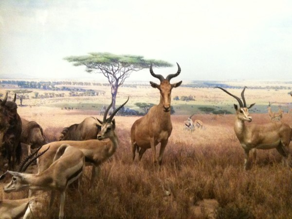 In Praise Of Dioramas - American Museum Natural History Show Treasure