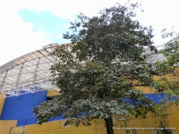 Guayacán, Humedal El Salitre